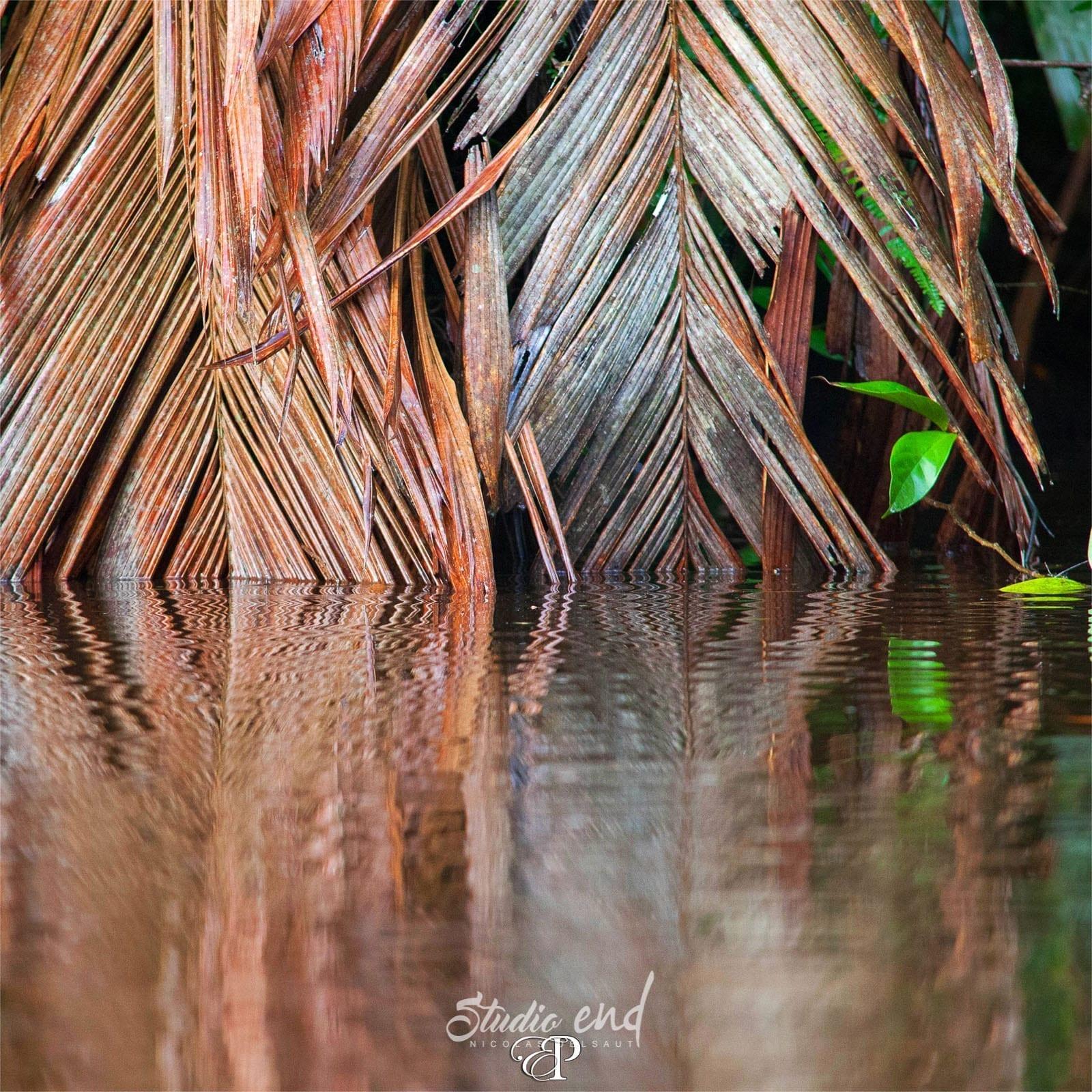 Photographie et reportage de voyage jungle Costa Rica