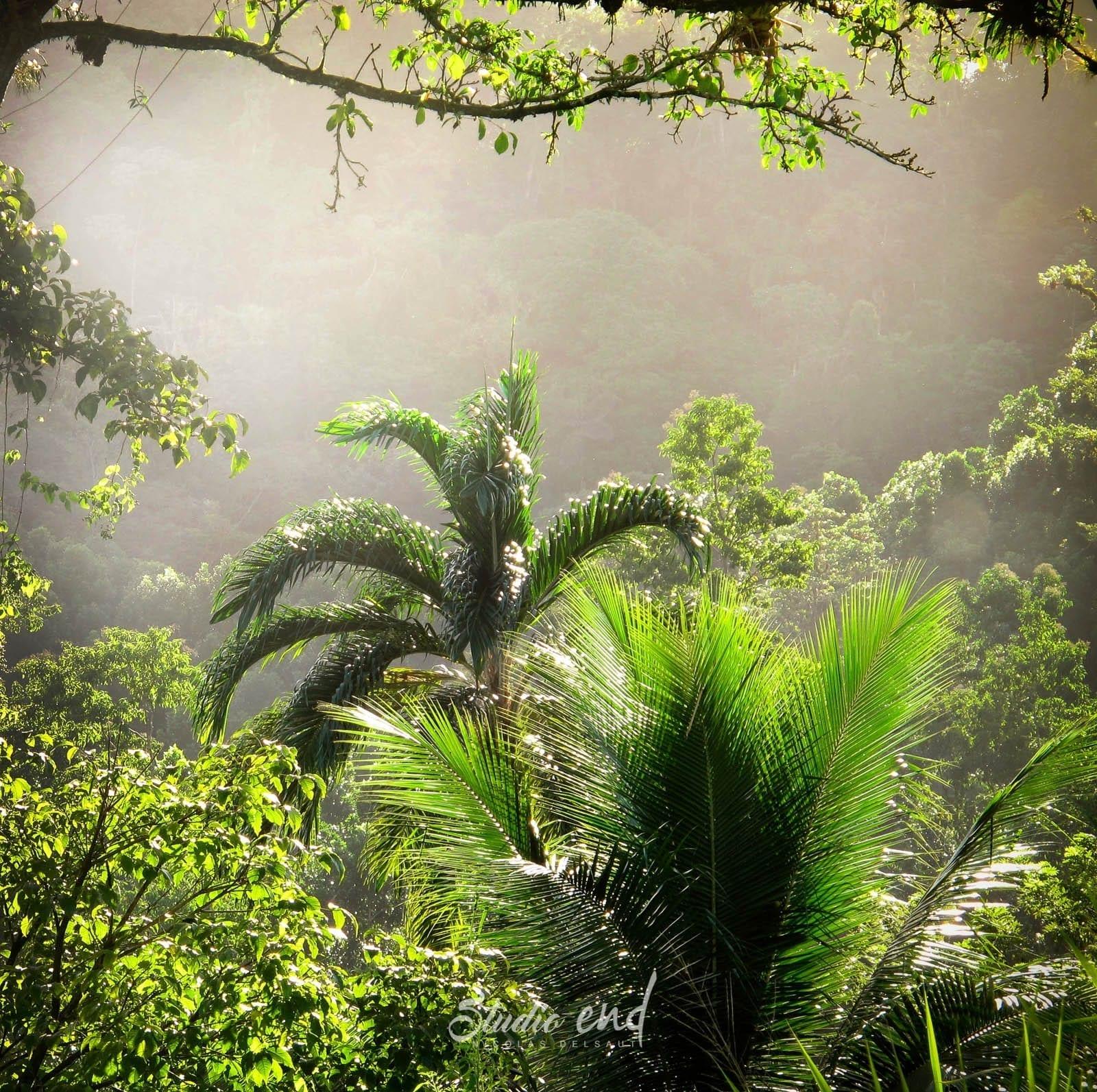 Photographie et reportage de voyage vue tropicale jungle Nicolas Delsaut