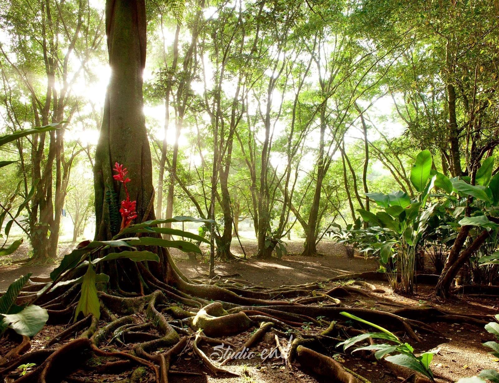 Photographie et reportage de voyage arbre tropical Costa Rica Nicolas Delsaut