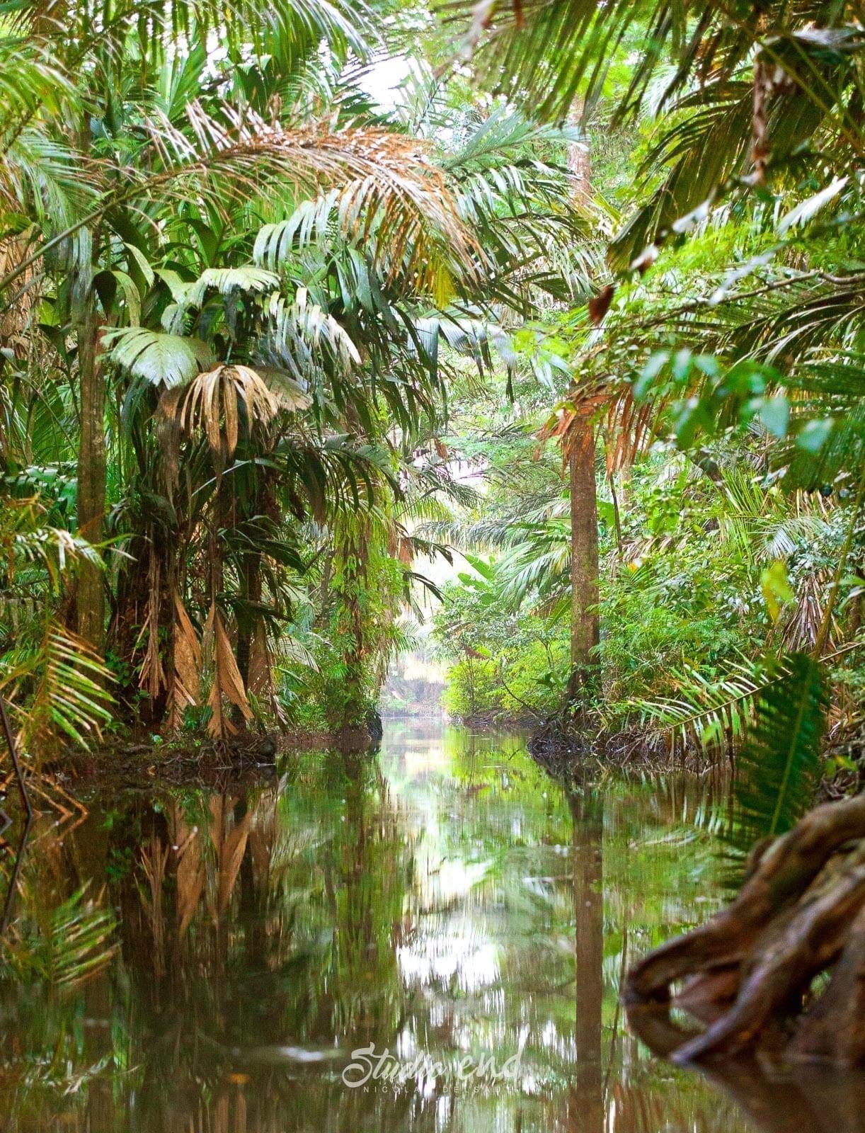 Photographe et reportage de voyage vue tropicale Costa Rica Nicolas Delsaut