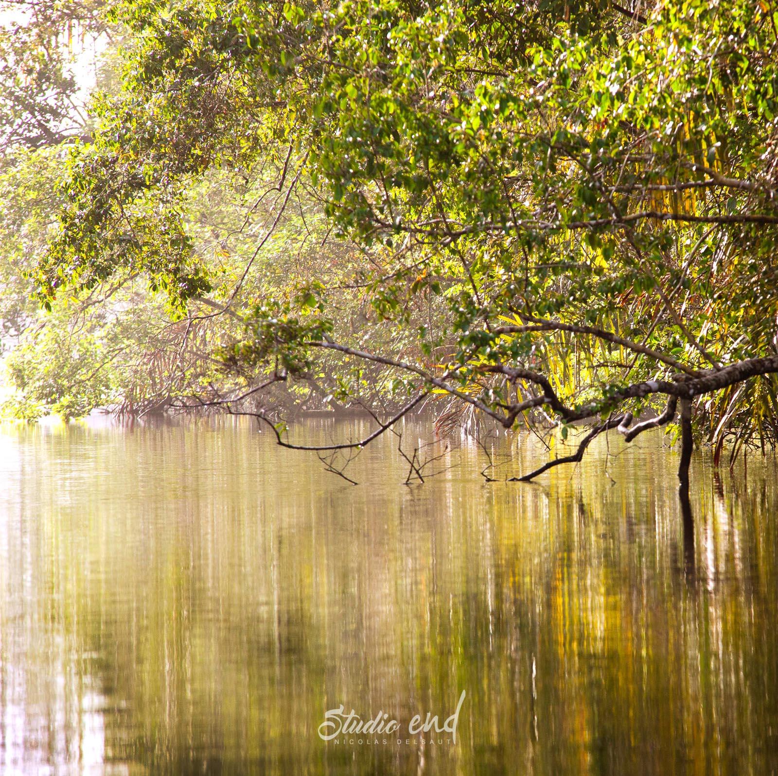 Photographe et reportage de voyage marais tropicaux Costa Rica Nicolas Delsaut