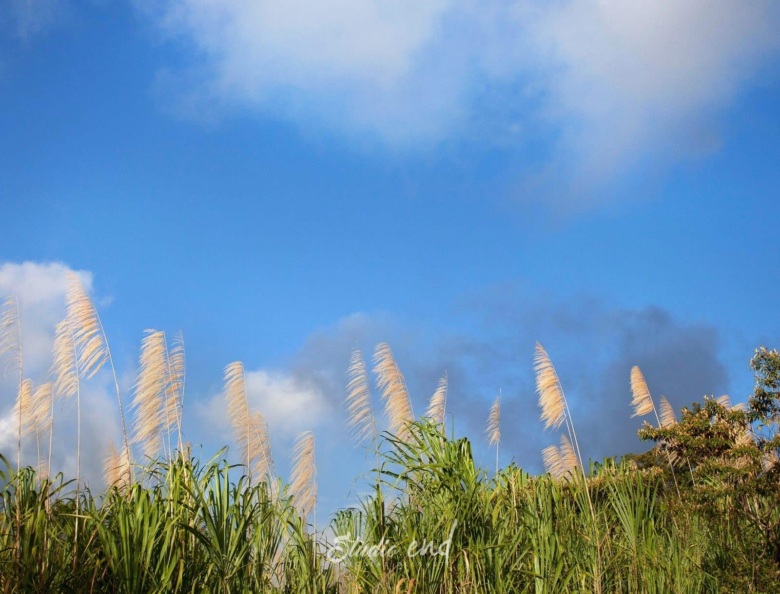 Photographe et reportage de voyage nature Costa Rica Nicolas Delsaut