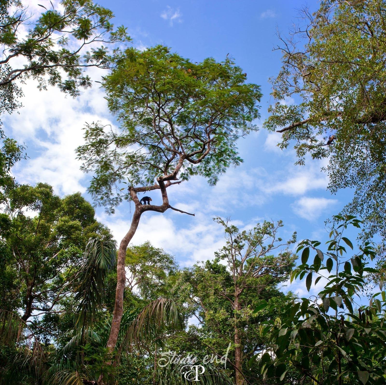 Photographe et reportage de voyage jungle Costa Rica Nicolas Delsaut