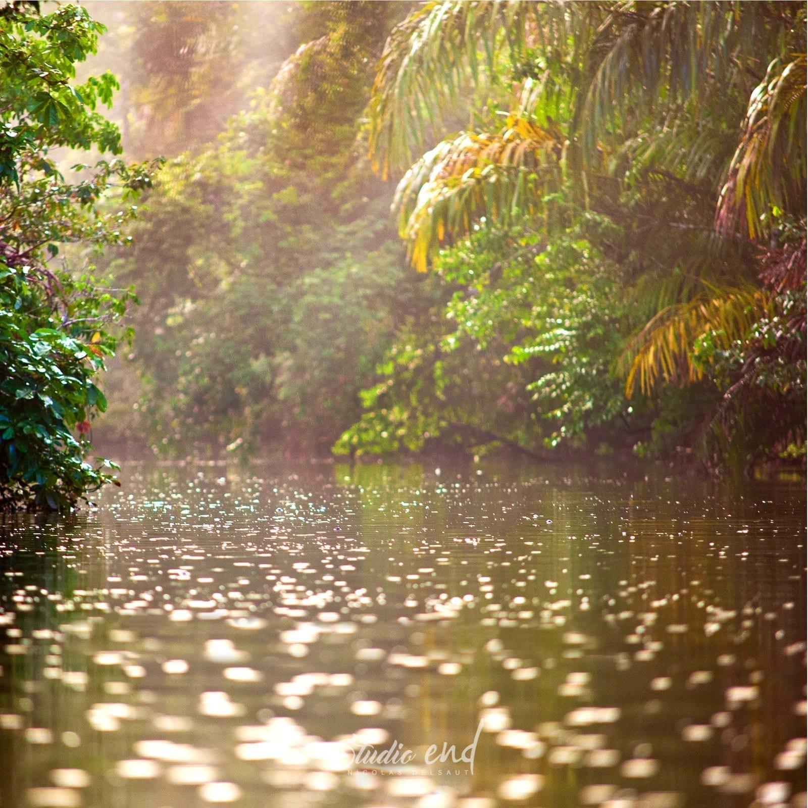 Photographies artistiques de voyage, la Jungle du Costa Rica