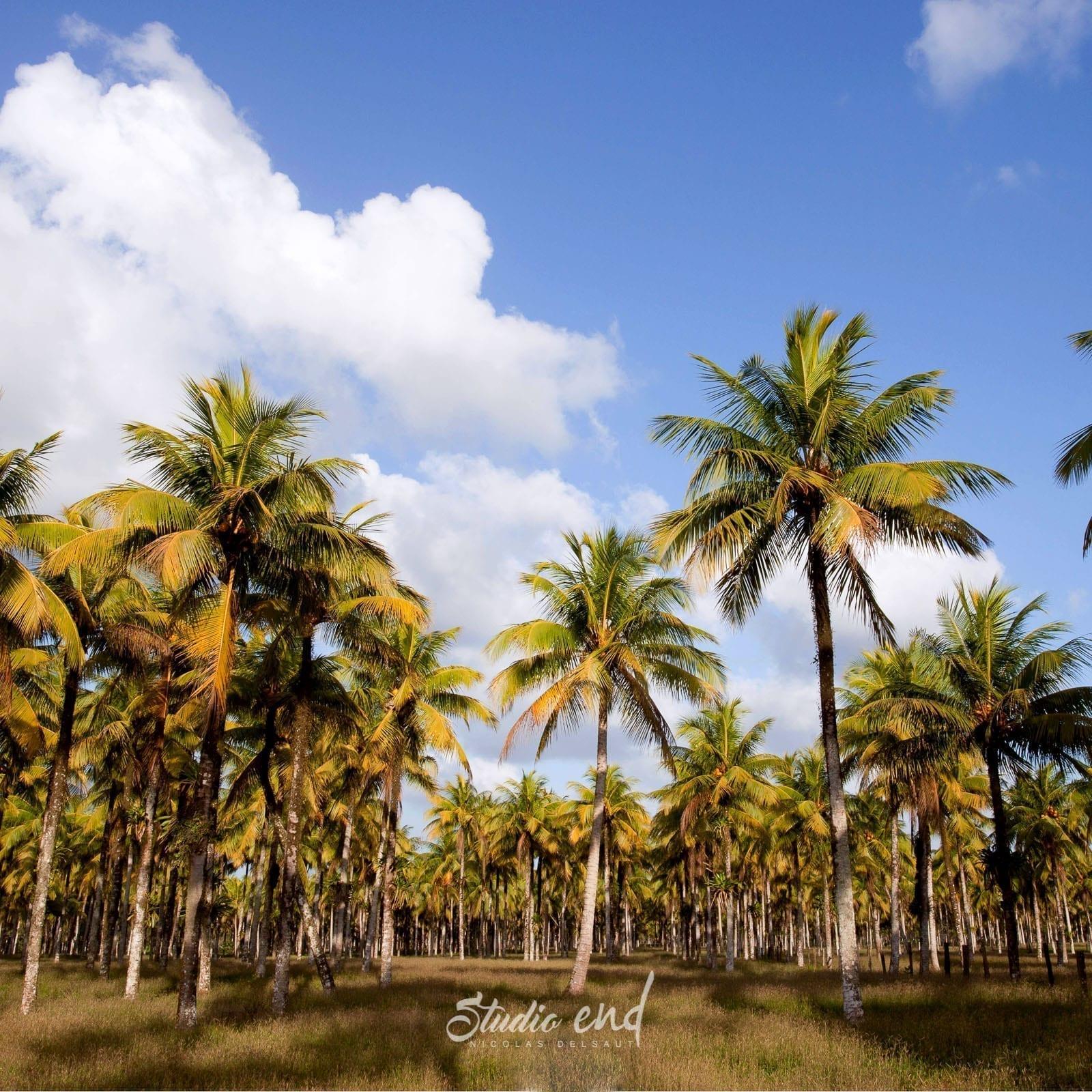 Photographie et reportage de voyage Costa Rica Nicolas Delsaut