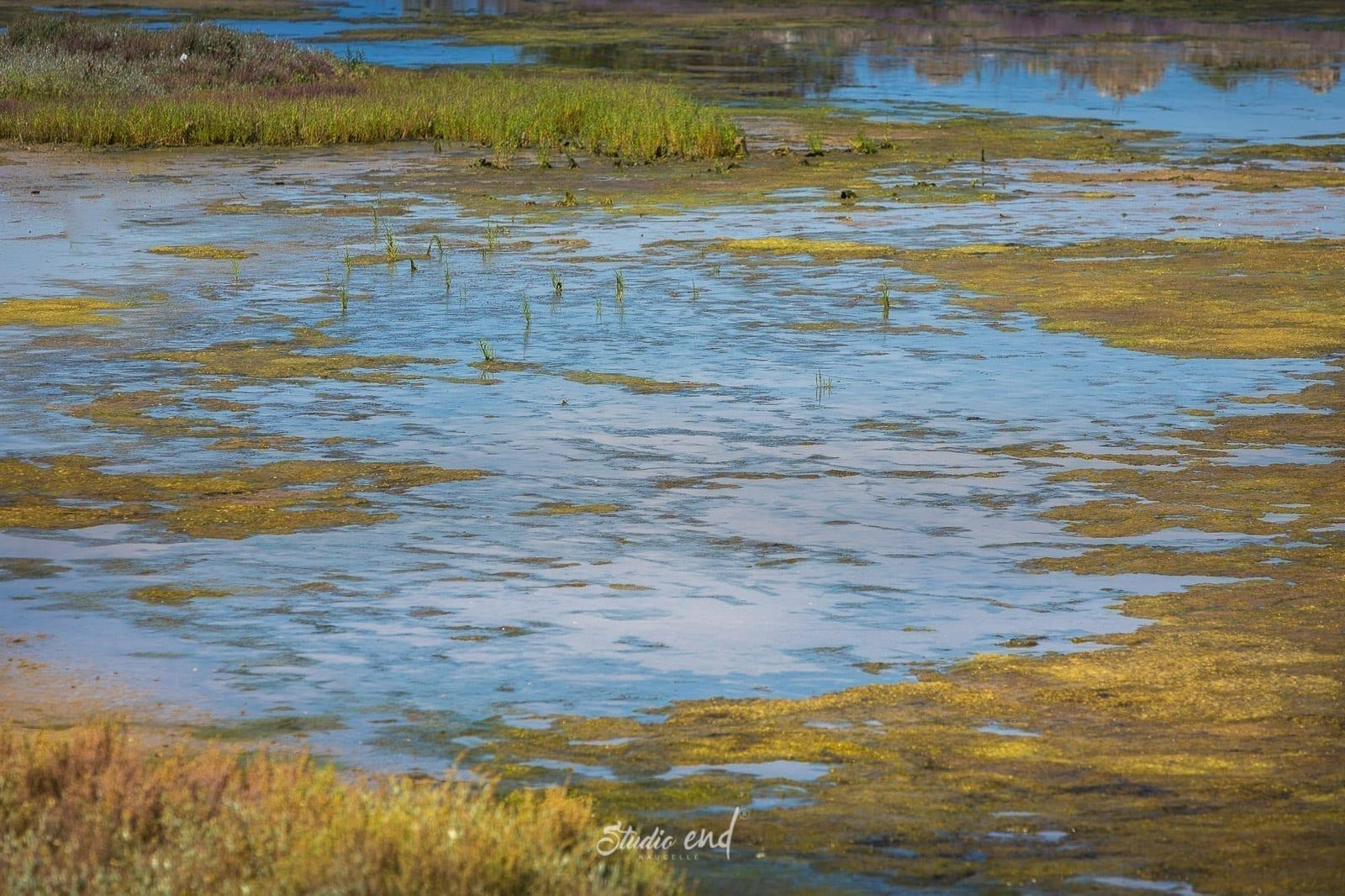 marais de l'ile de ré en France, photographe Aveyron
