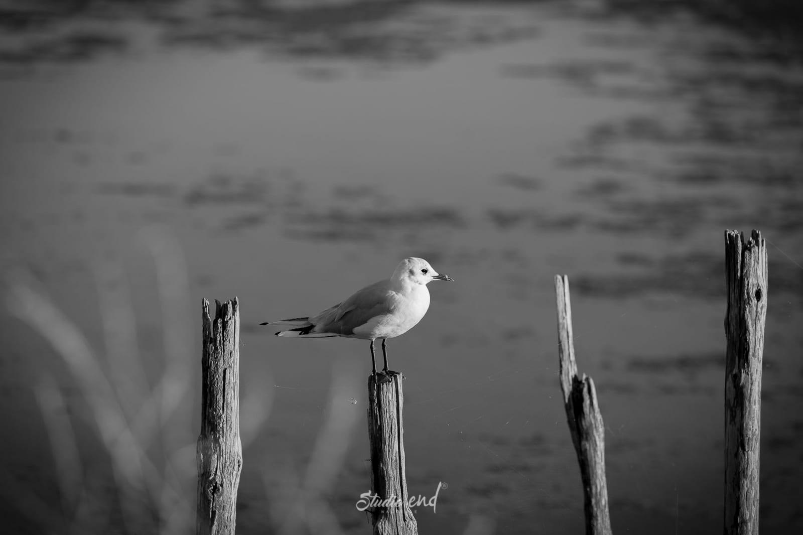 Mouette, photographe animalier