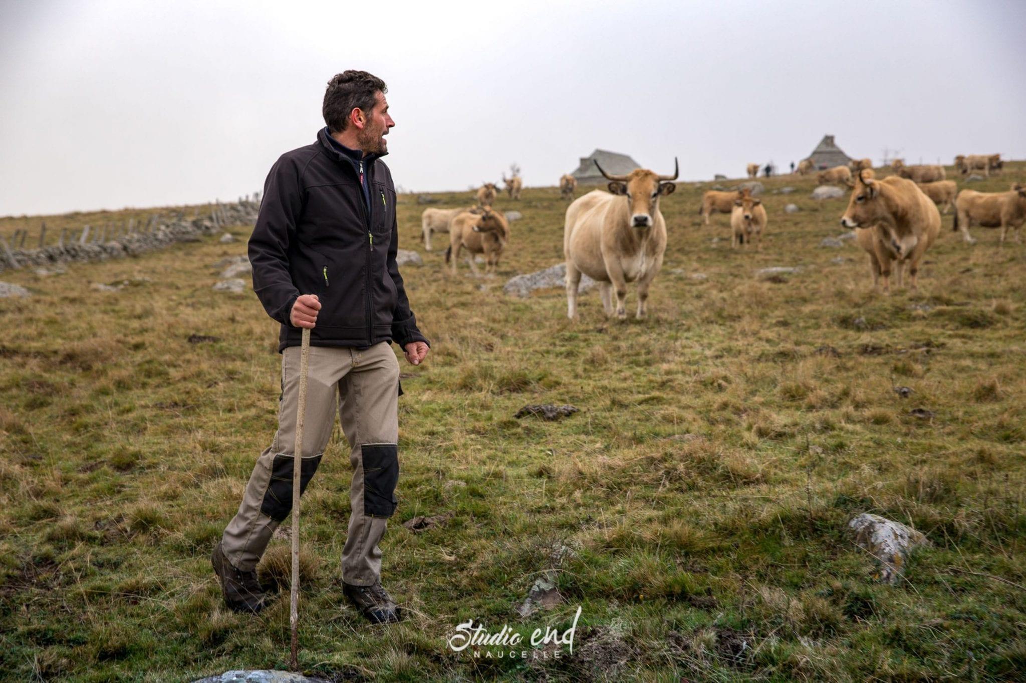 Agriculteur et ses vaches, reportage pour les professionnels en Aveyron