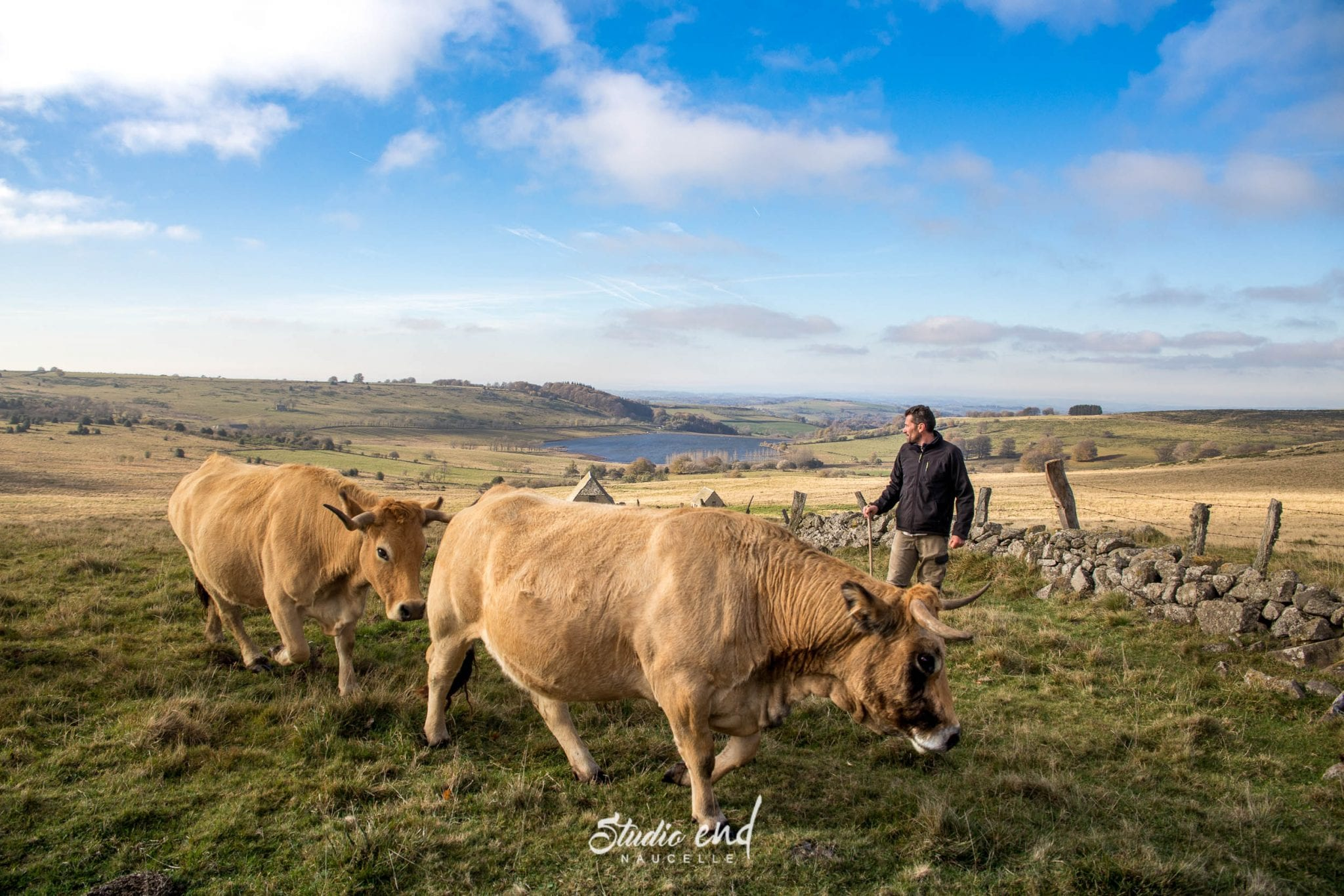 Photographe Aveyron, photographe Tarn STUDIO END® photo animaux
