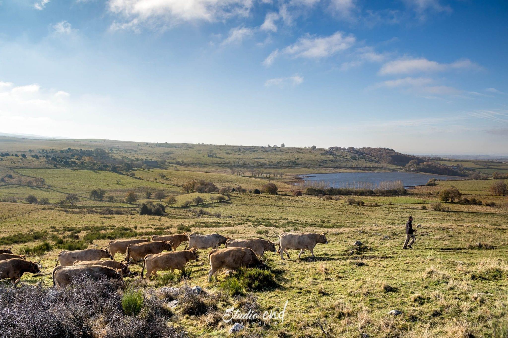Paysage d'Aubrac proche de Rodez, photo de paysage