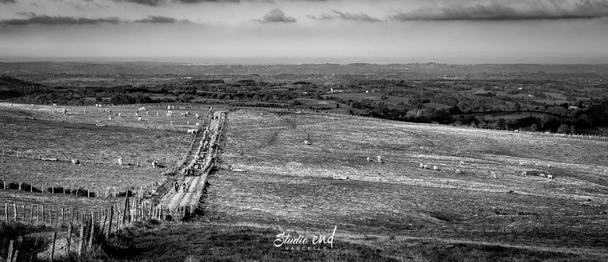 Vue drone de champs de brebis campagne Studio End
