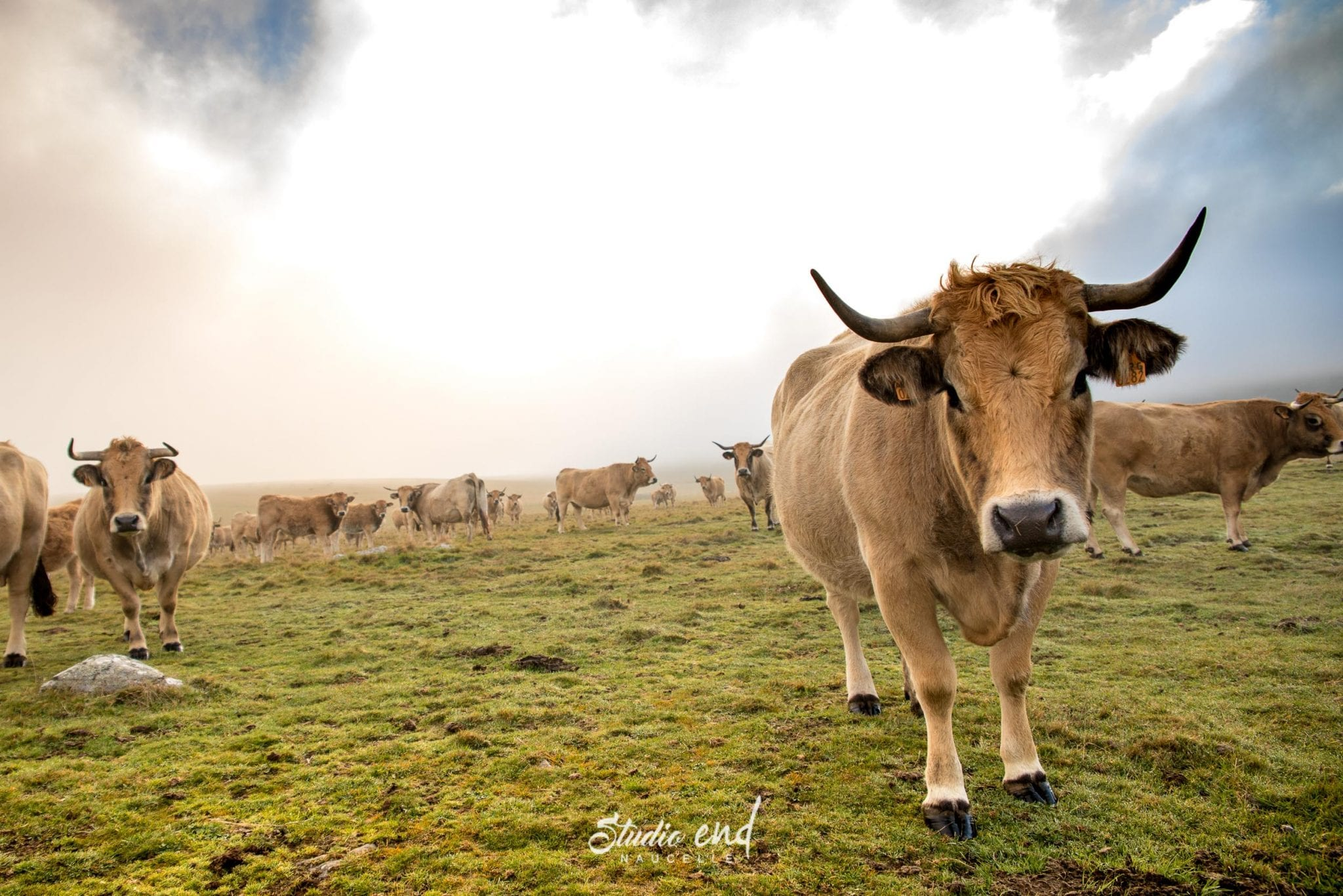 Reportage animalier, pro, entreprise Studio End, milieu agricole Tarn et Aveyron