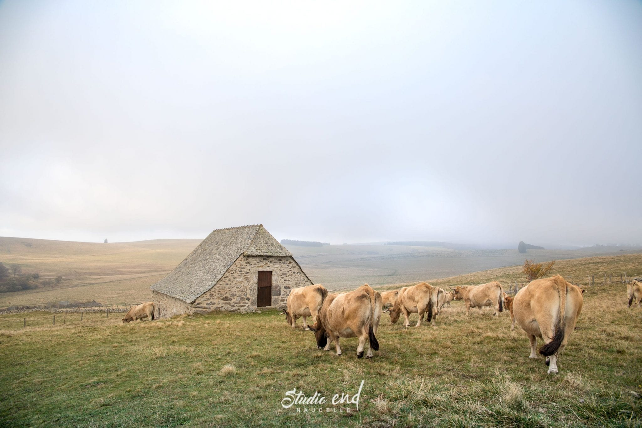 Buron et vaches aveyronnaise, reportage photo pour les entreprises à Rodez